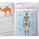 Heft Numbers und Physiology
